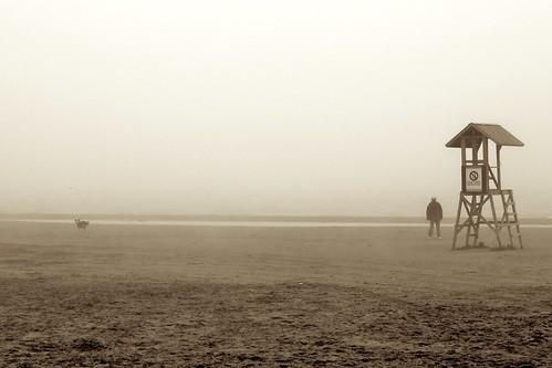 Beach, Dog and Fog