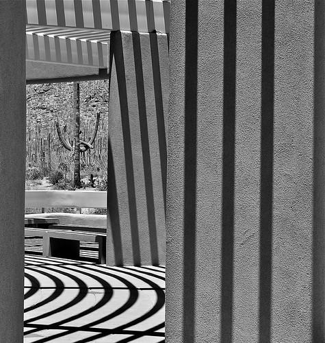 Saguaro, Lines and Shadows by Shirley Buxton