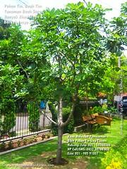 Pohon Tin Besar 021-50363366