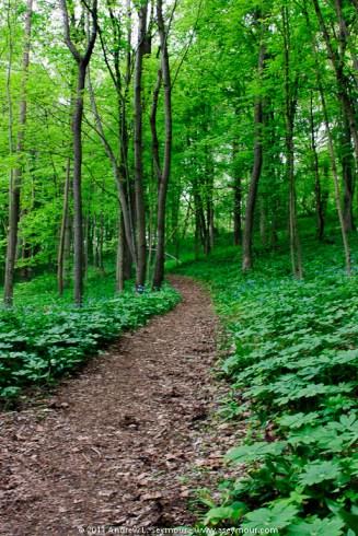 110501 Stroud Preserve 145 tm - Wooded Trail