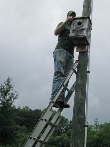 Eric about to check a Kestrel Box