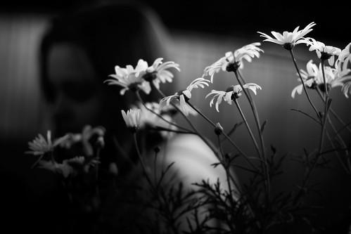flowers by Matt Hovey (on hiatus. back soon!)
