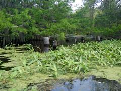 River Pilings