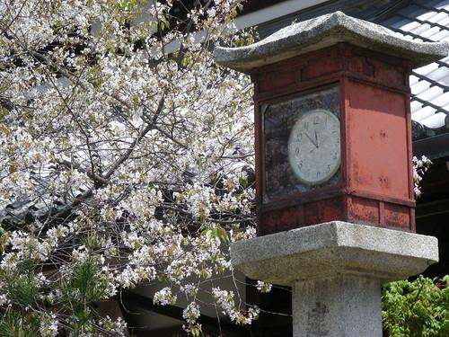 time for blossom