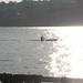 16 Rose Bay rower