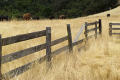 rural Sonoma