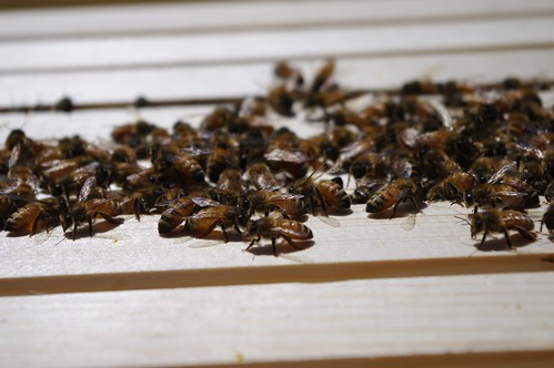 Artsy Bees