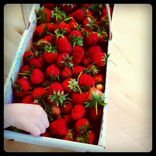 the gorgeous strawberries we picked on the farm today