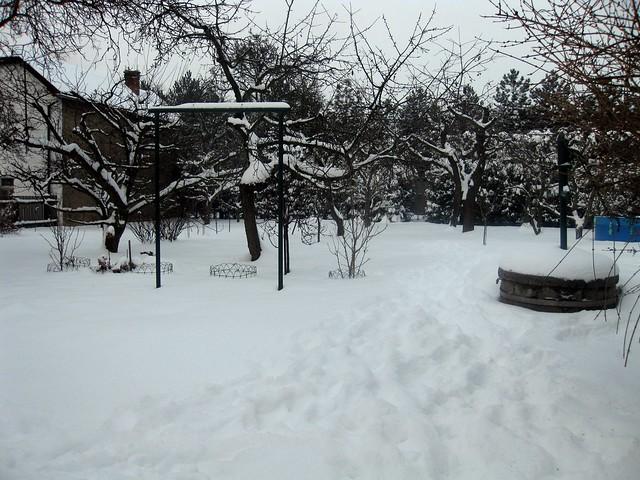 Under the snow...