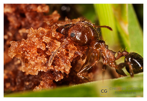 "Algunas Macros • <a style=""font-size:0.8em;"" href=""http://www.flickr.com/photos/20681585@N05/5247704387/"" target=""_blank"">View on Flickr</a>"