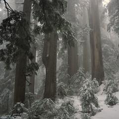 Brothers Creek, 27 Dec 2010
