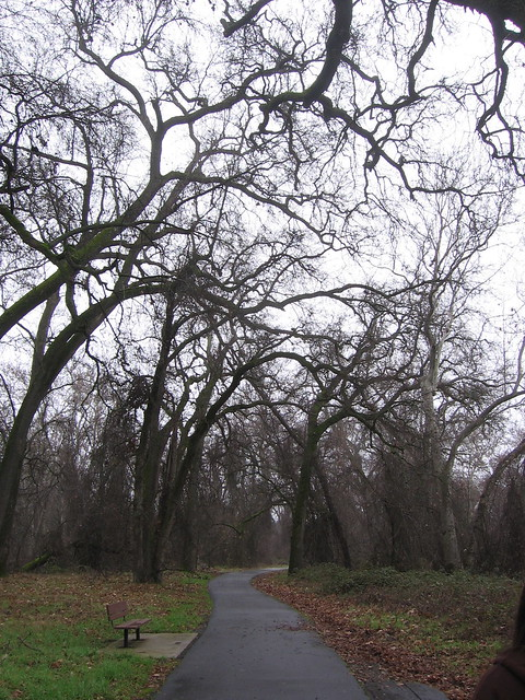 A view from a Chico park