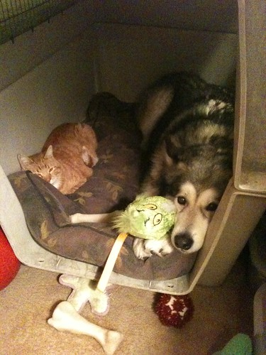 Luka shares his crate
