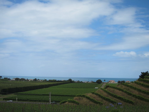 View from Esk Valley winery