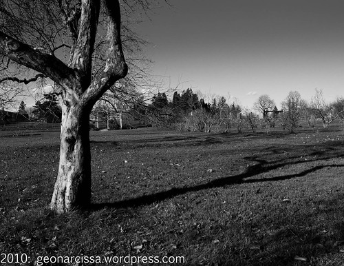 arboretum, autumn, black and white, november, ontario, ottawa, shadow, tree1.jpg