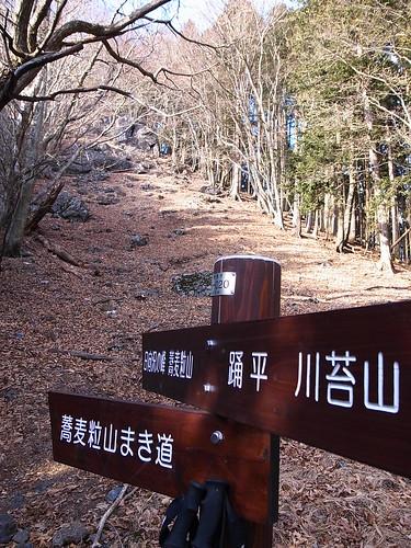 柱谷ノ峰の下の分岐, 蕎麦粒山トレッキング(奥多摩) Mt.Sobatsubuyama Trekking
