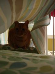 I built the cat a sheet fort.