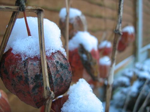 snowy globes