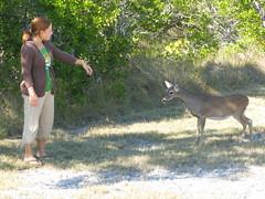 Wanda with a Key Deer