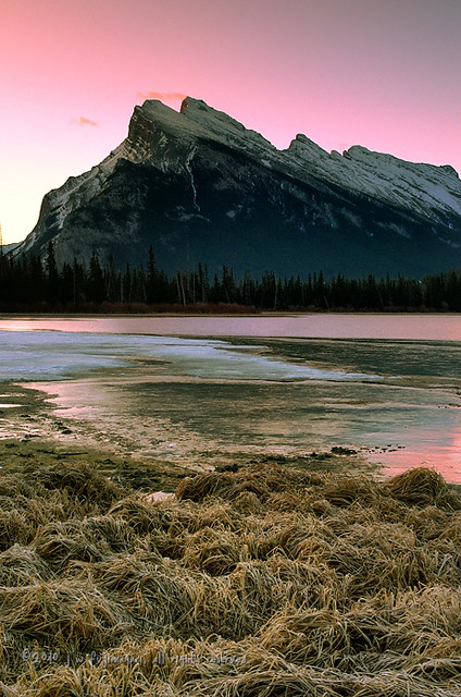 Purple Mount Rundle