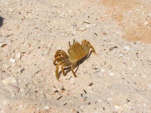 Crab On Monkey Mia Beach
