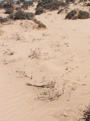 Animal Footprints In the Outback