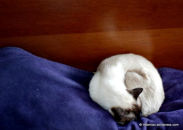 tash 2-19-2011 2-00-00 PM
