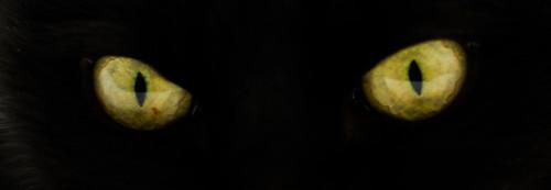 Green eyes in the dark