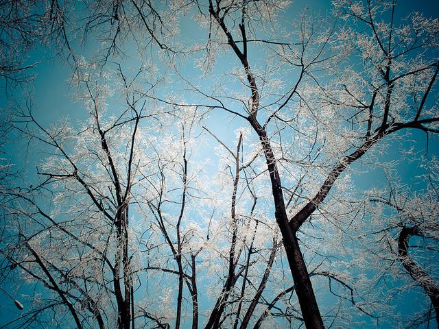 Turquoise skies