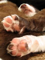 1523 Queechee puppy feet