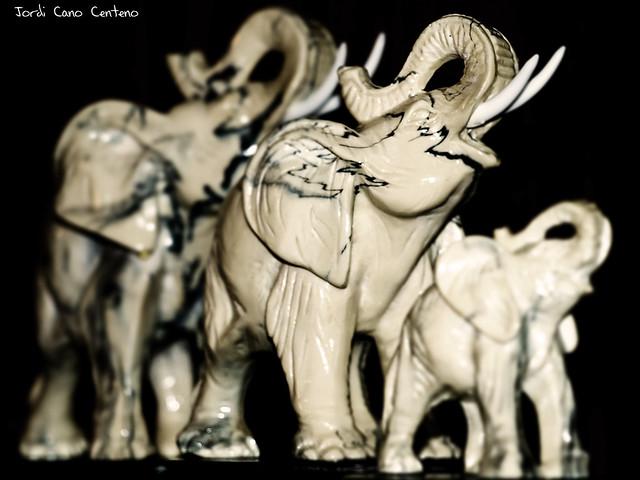 Elefantes...