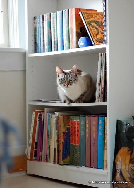 chun's bookcase