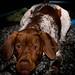 Sådan husse, sådan hund #fotosöndag #självbild