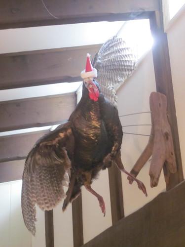 festive taxidermy