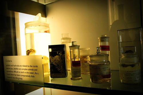 Cnidaria-Natural-History-Museum