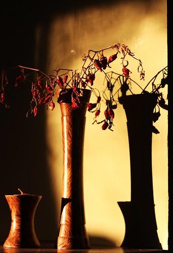 Dried Plant Shadows