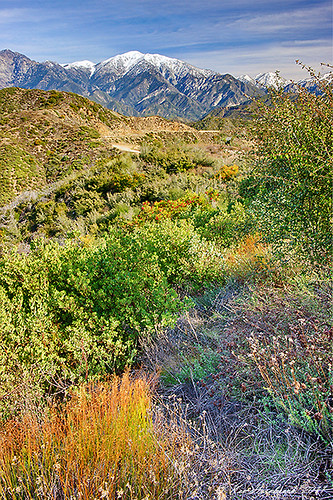 Mount Baldy from Glendora Ridge  DSC00399