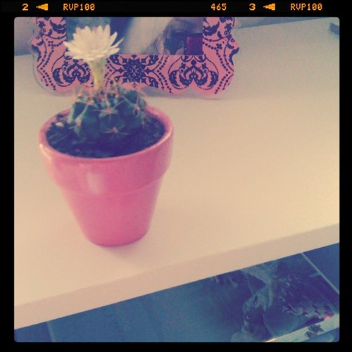 Found this tiny cactus at the supermarket, repotted it, put it under a sunlamp and it bloomed, best dollar ever spent!