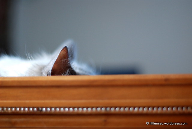 quiet naps