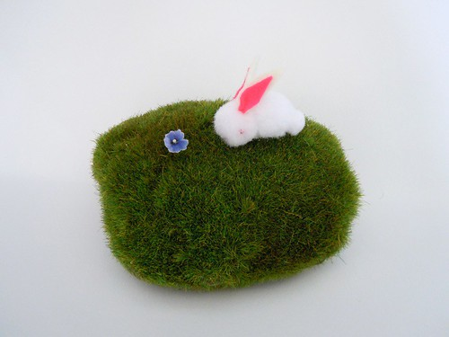 Pom pom bunny sniffs a flower