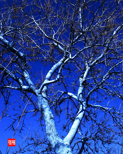 D80-CHI_BlueOnBlue01-2011_02-28B