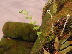 moss chair ferns