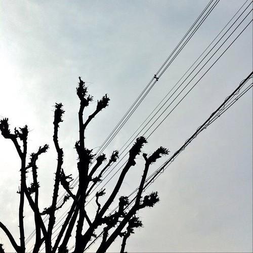 はーい!こんちゃー!今日の大阪曇り空ですぅ~。でも、笑顔でヨロシクんクンクン(^O^☆♪ #Osaka #telephone_line