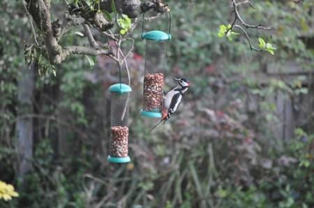 Bird enjoying nuts