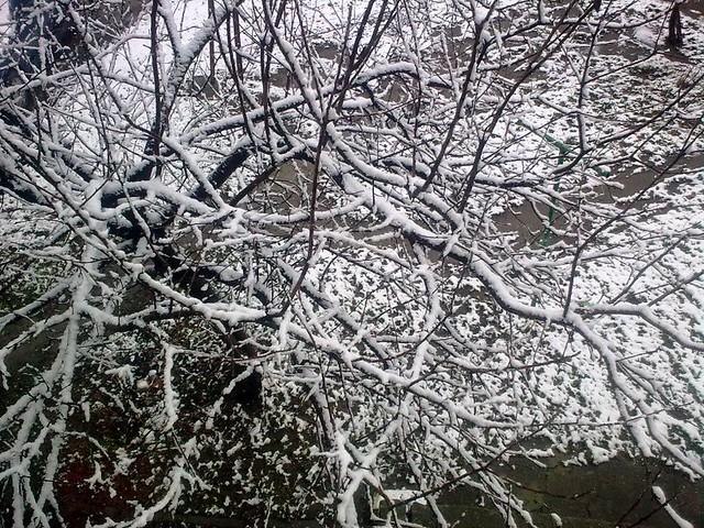 Ninge la Bălţi