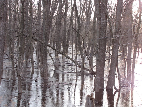 Reminds me of Dagobah