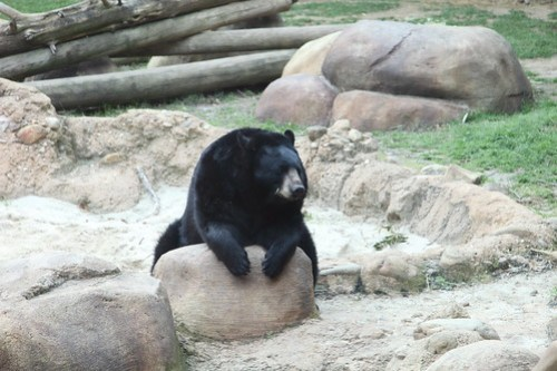 Chairman Bear