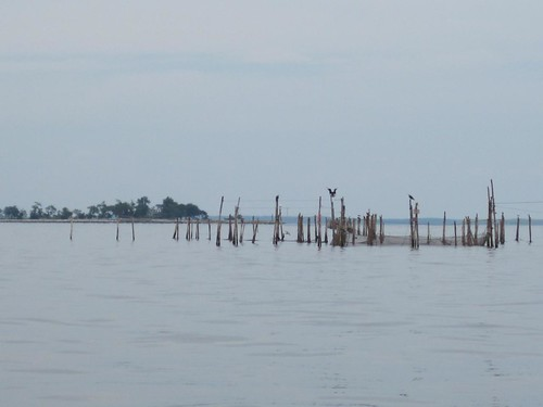 Watch out for fish traps