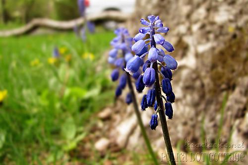Spring day 29 - Gathering