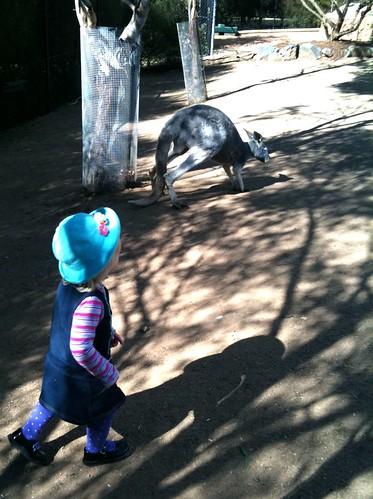 alice and kangaroo